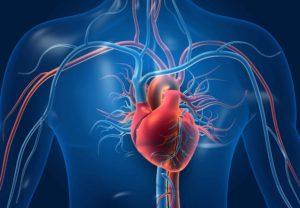 metabole en cardiovasculaire gezondheid